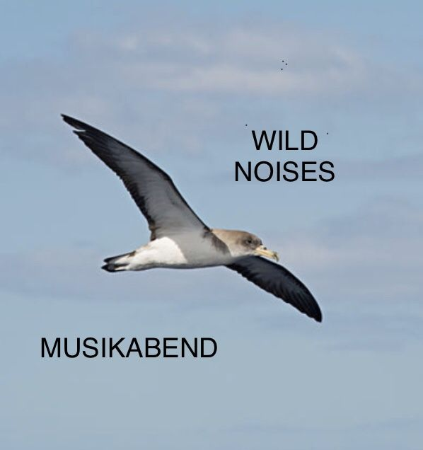 MUSIKABEND feat. lomax-deckard.de am 25.08.2018 - Wild noises, lovely August