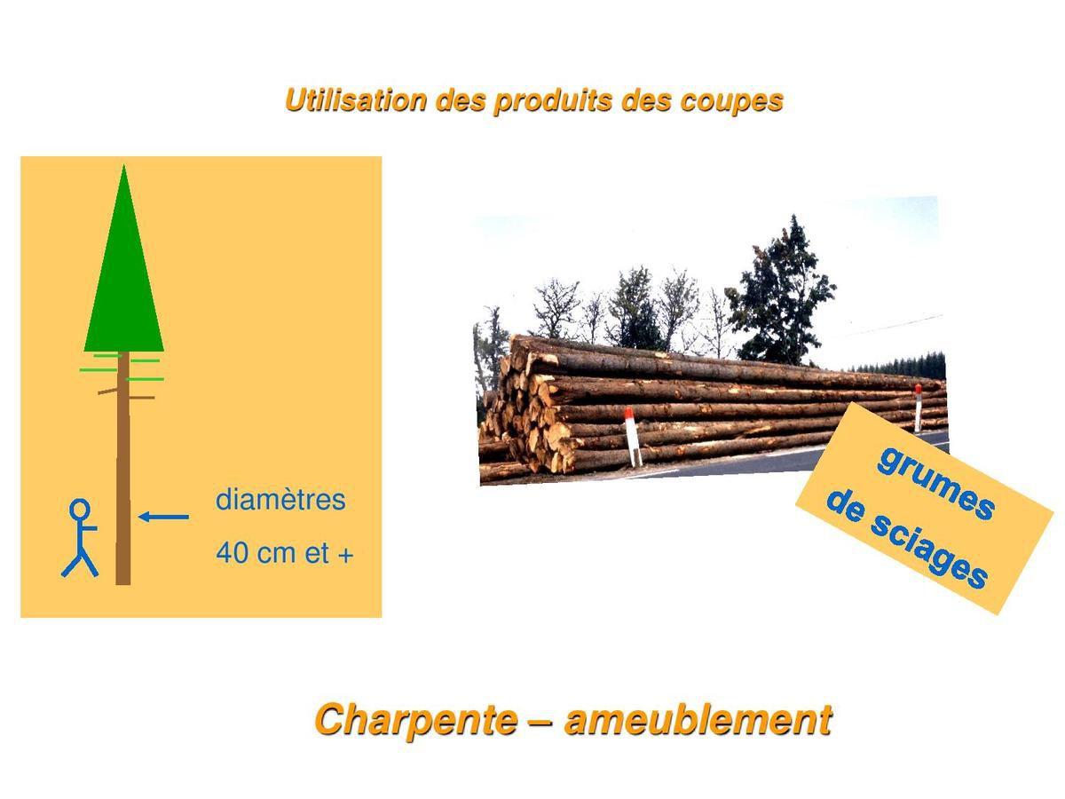 Compte rendu de la réunion sur la vente des bois le 20/01/2017