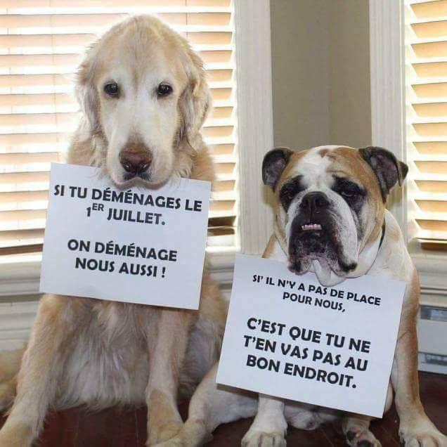 Un propriétaire peut-il vous interdire de détenir un chien ou un chat ?
