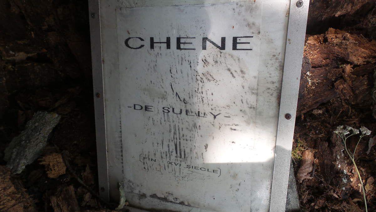 VILLARIES - 31 : LE CHENE DE SULLY