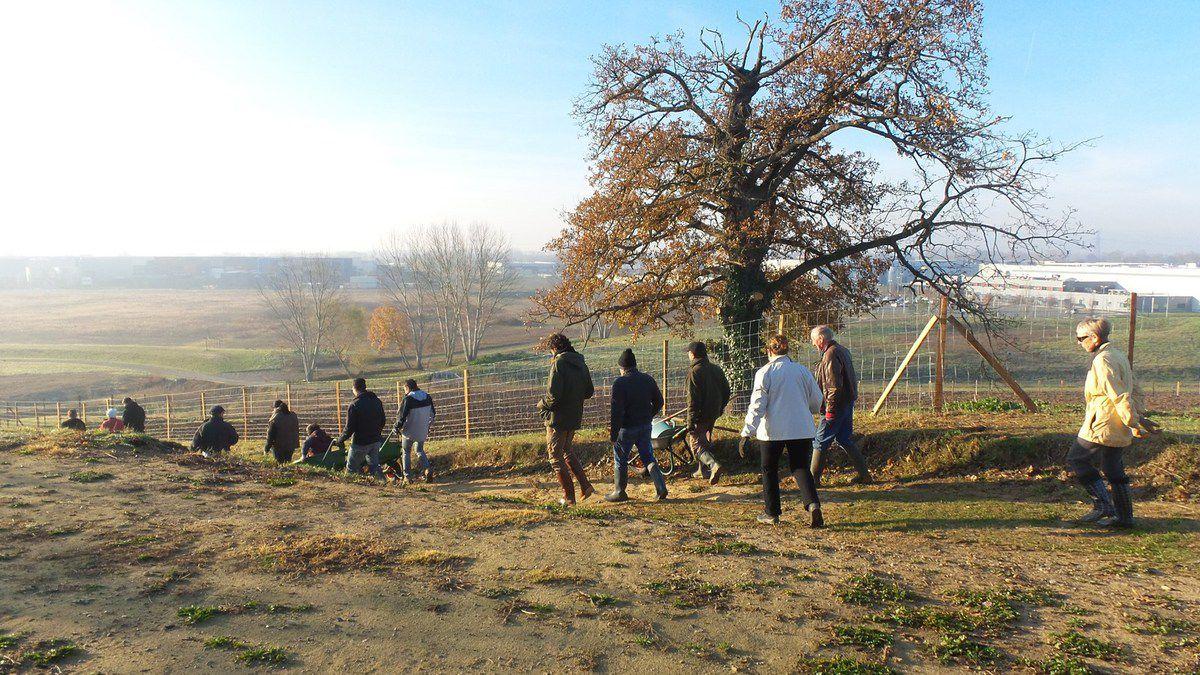 CASTELNAU D'ESTRETEFONDS : PLANTATION DE LA HAIE DES FUTURS JARDINS PARTAGES - FERME DE FONDADA