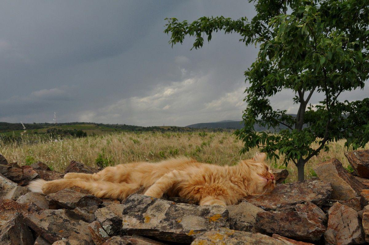 virginia chat The latest tweets from mao (@ca_va_chat) kinkiさんと猫と旅が好き。萌え下手で視点がちょっと違うかも・・・なマイペース人。全然違ってすごく一緒なftrをこよなく愛し、仲良しftrもソロも応援してます.