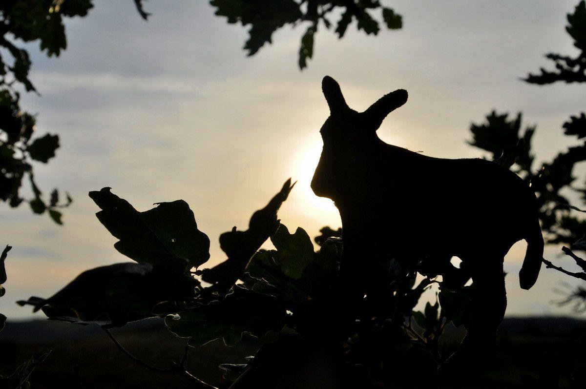 L'âne est sur la branche