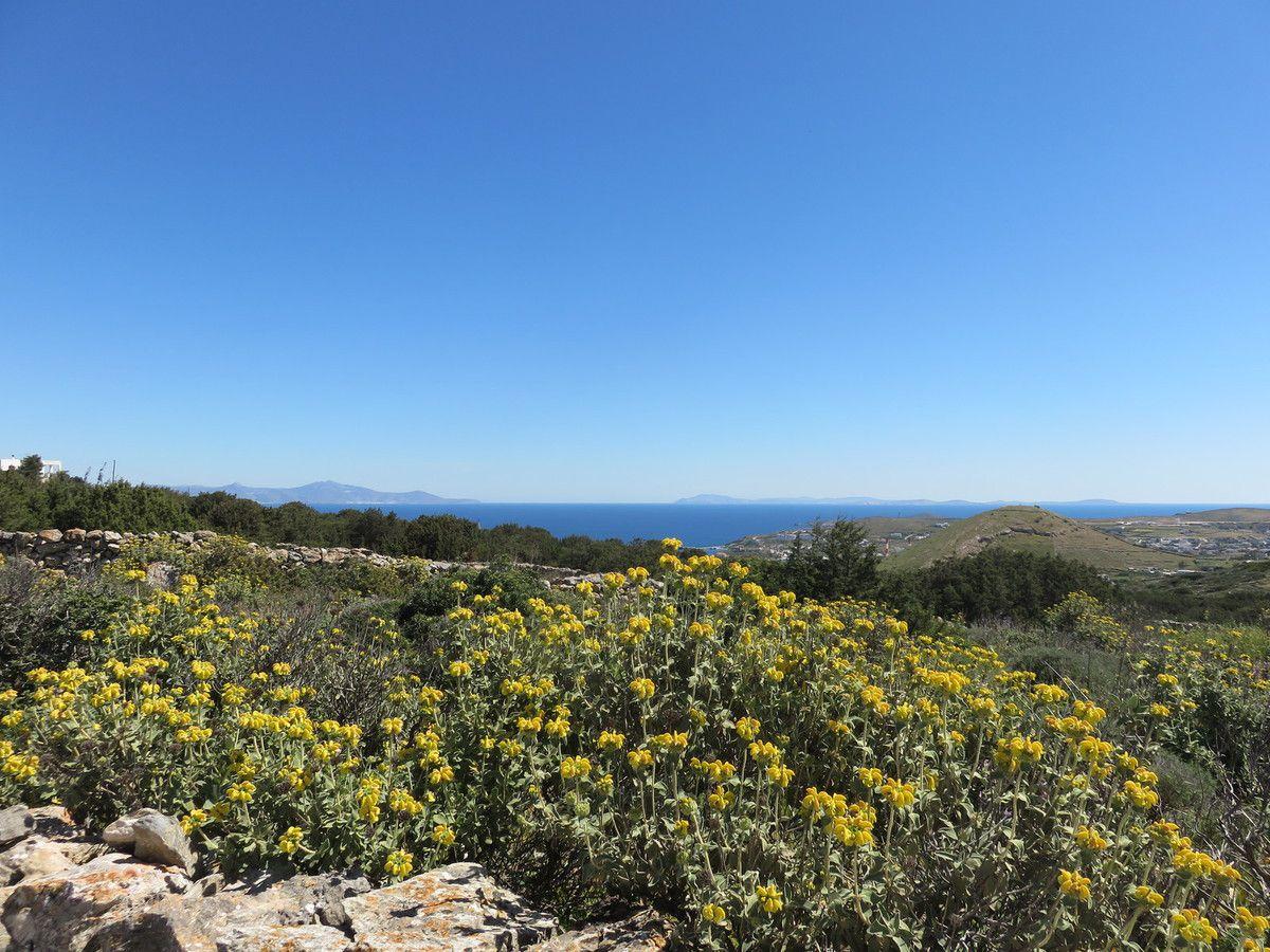 Plantes de l'île de Syros dans les Cyclades Avril 2018