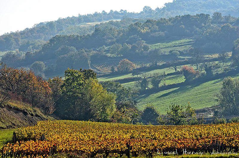 Promenade d'Automne dans les Vignes