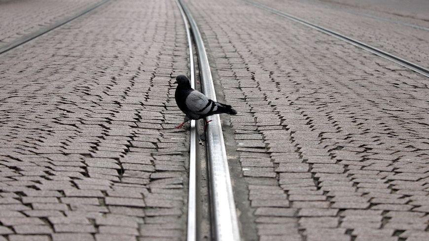 Les pigeons ahuris/ 1/06/2020