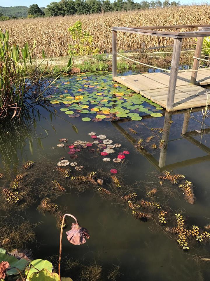 30 variétés de Lotus, 55 variétés de Nymphéas