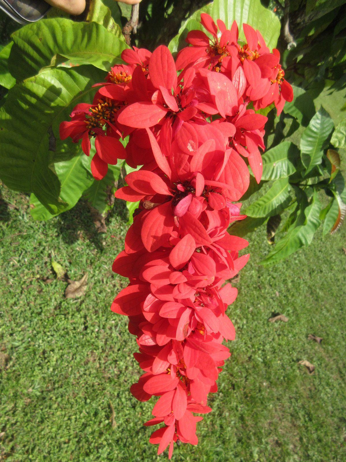 128ème pays visité : TRINIDAD & TOBAGO