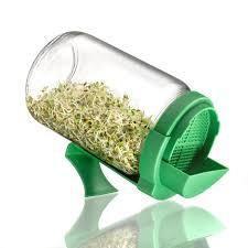 graines germées dans germoir en bocal