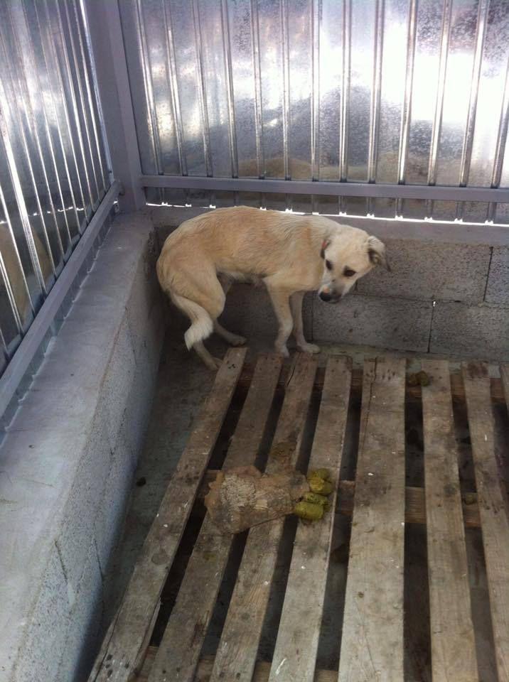 Appel aux dons suite au sauvetage de 6 chiens