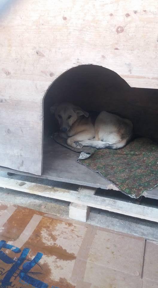 Yoschi dans une fourrière roumaine