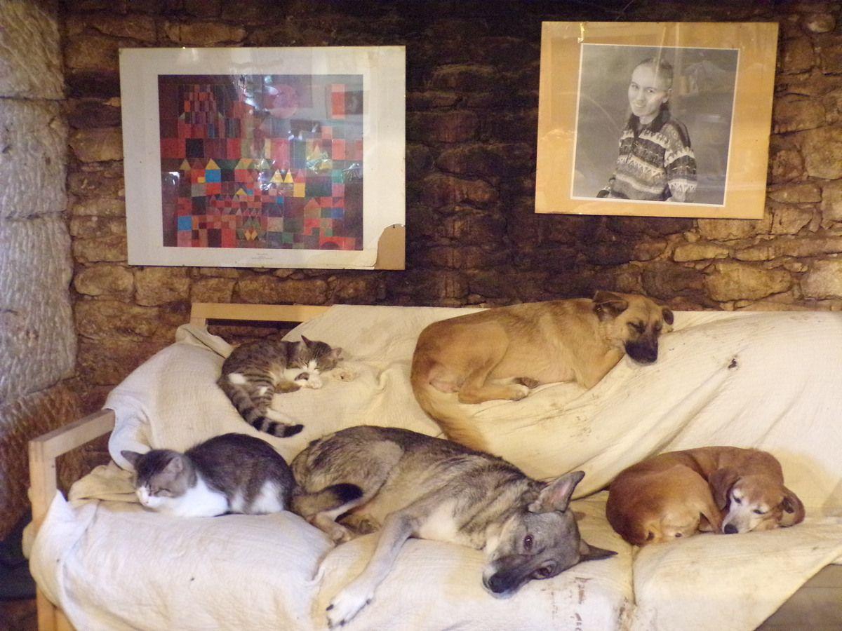 Belle cohabitation entre chien et chat