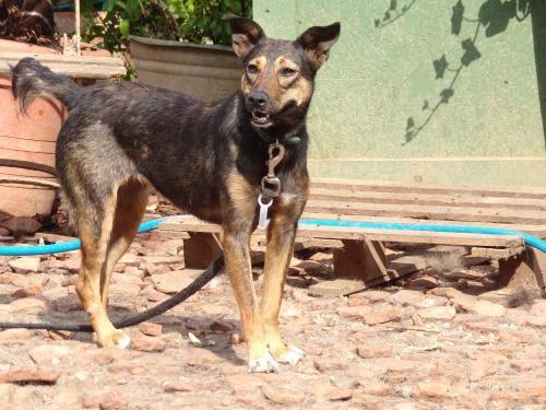 A l'adoption :  Pina, une gentille timide de 3/4 ans