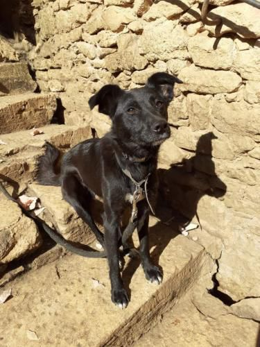 Chica, une petite chienne adorable : ADOPTEE
