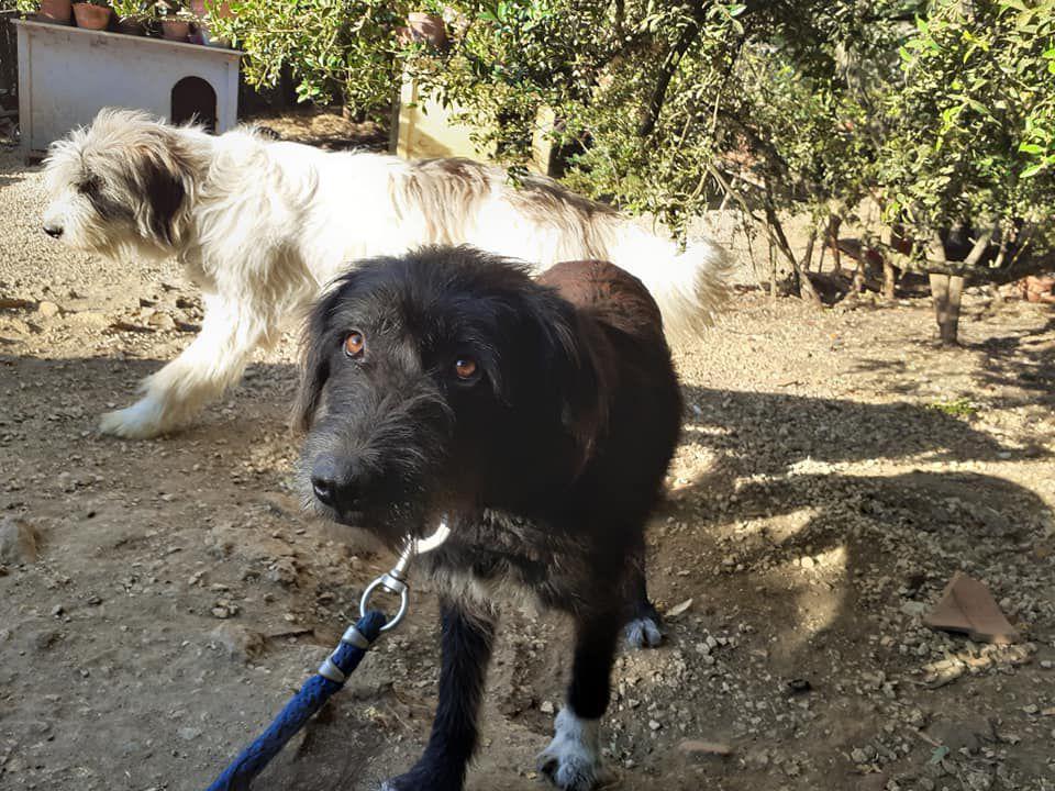 A l'adoption, Savannah une belle griffon noire