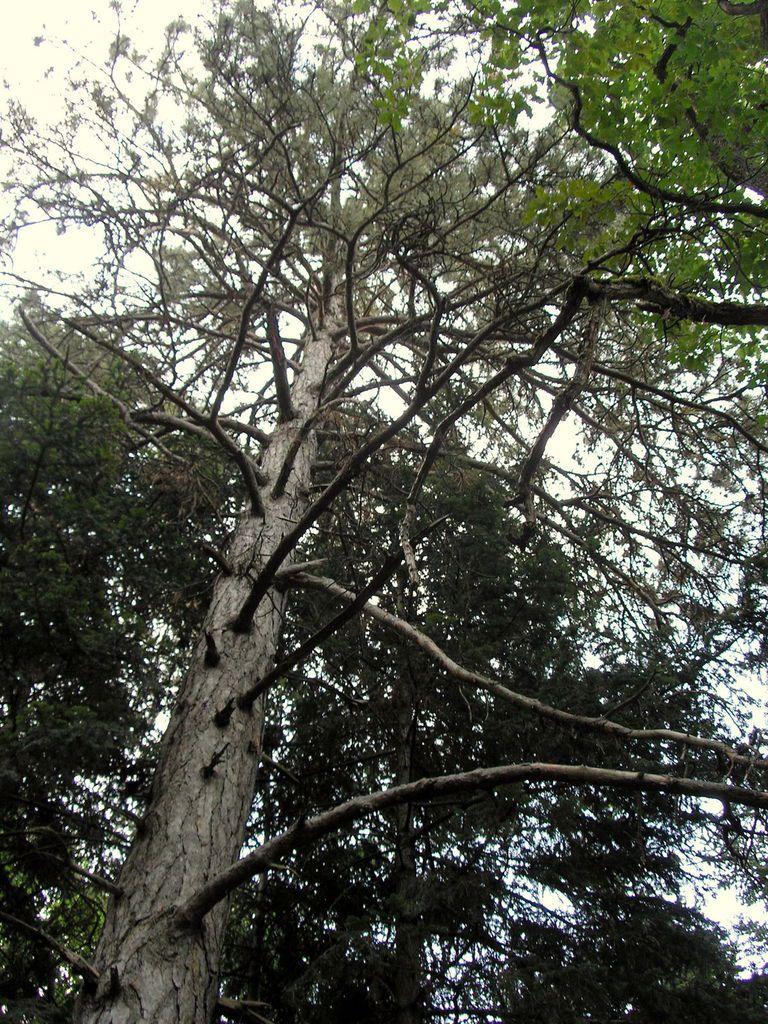 Parmi les diverses essences de résineux, il y a notamment les sapins Nordmann du Caucase - le pin noir d'Autriche et des Balkans - le cèdre de l'Atlas etc... tous ces arbres peuvent atteindre des hauteurs de 40 m. Regardez le beau champignon du matin et cette belle racine qui préfère l'air libre. Bref ! des sentiers riches en découvertes
