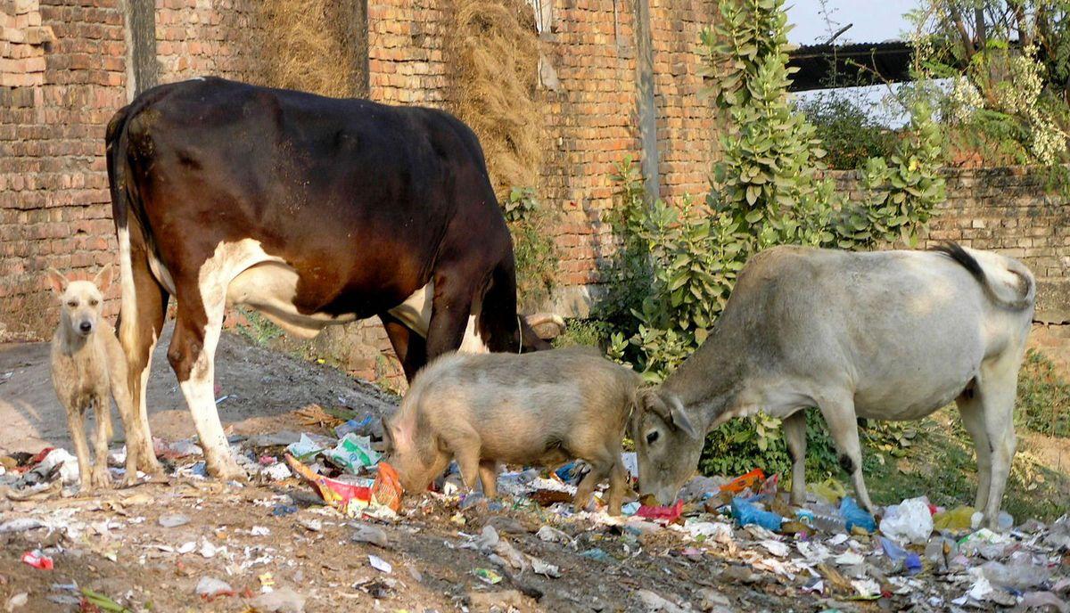 JAUNPUR (Vallée du Gange)