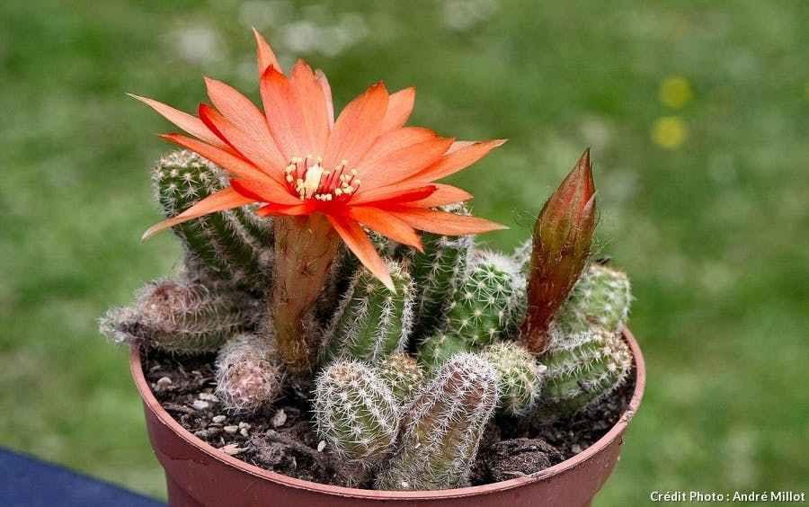 Beauté de la pollinisation des fleurs
