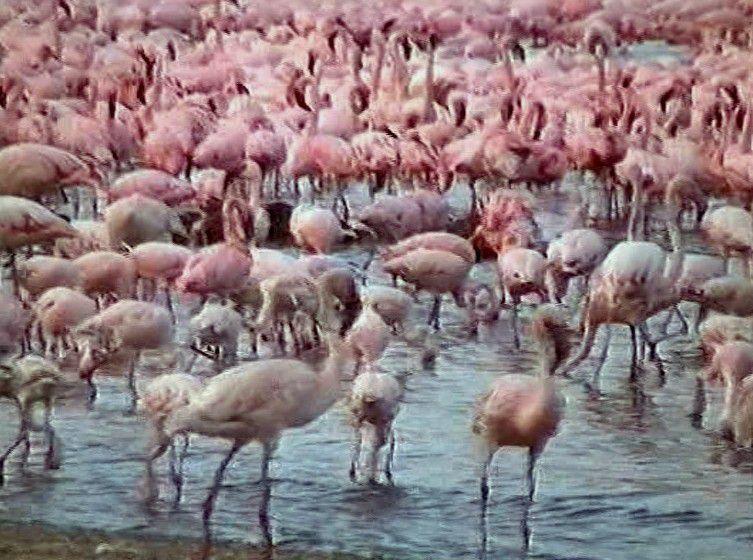 Kénia-Safari-Photo