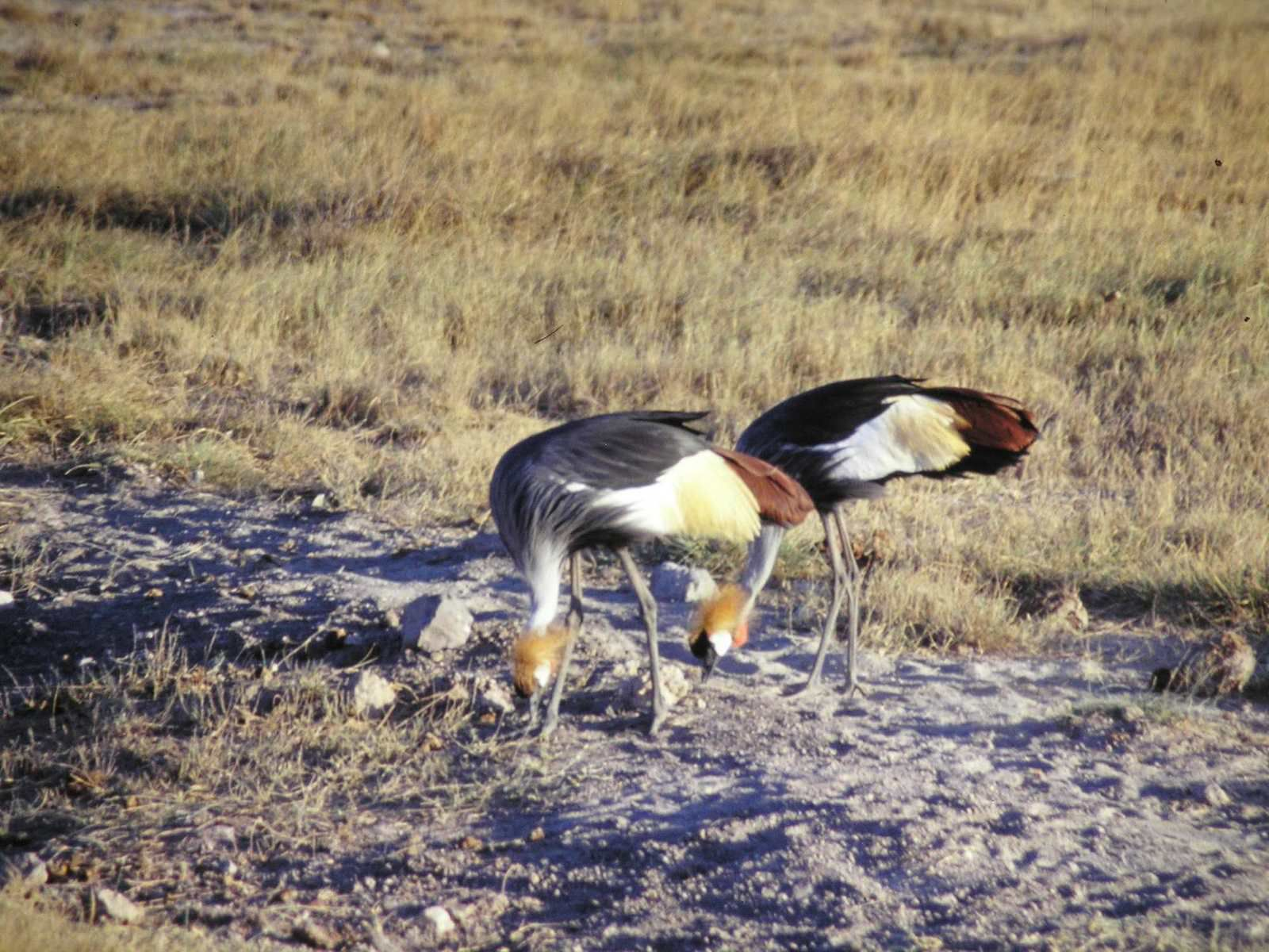 Kénia-Lac Bogoria