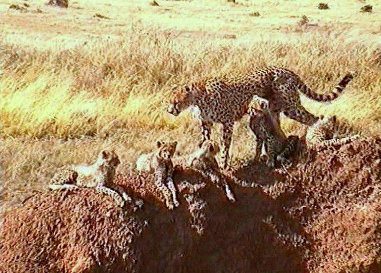 Kénia- Réserve de Samburu