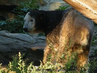 Knut am 26. September 2009