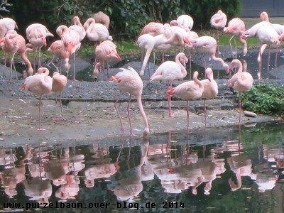 Flamingospiegelung ;-)