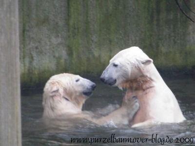 Knut und Gianna am 23. Dezember 2009