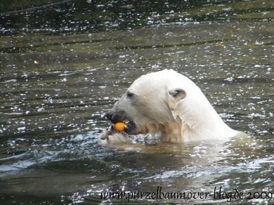 Knut am 21. Mai 2009