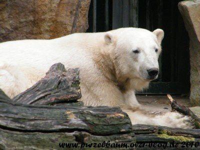 Knut am 24. Juli 2010