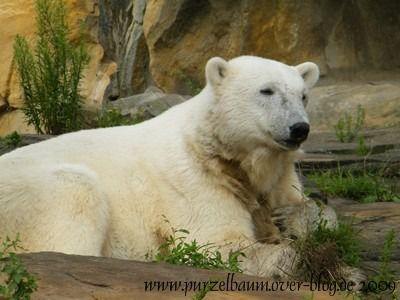 Knut am 26. Juli 2009