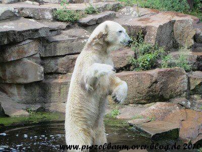 Knut am 20. August 2010