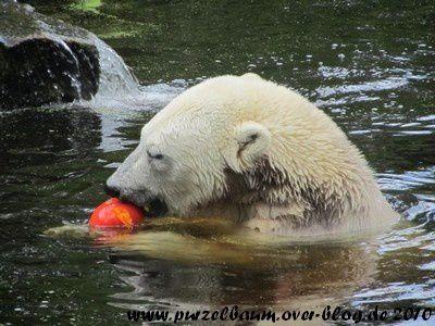 Knut am 24. August 2010