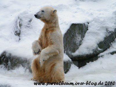 Knut am 31. Dezember 2010