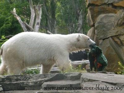 Knut am 5. Juni 2009