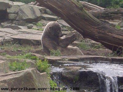 Knut am 13. Juni 2008