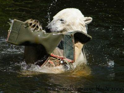 Knut am 13. Juni 2009