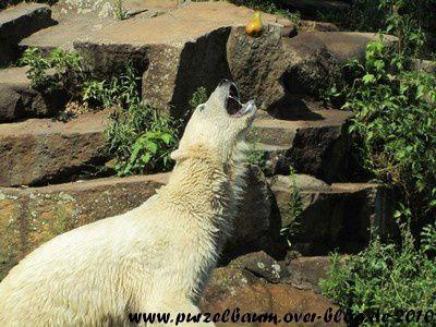Knut am 22. Juli 2010