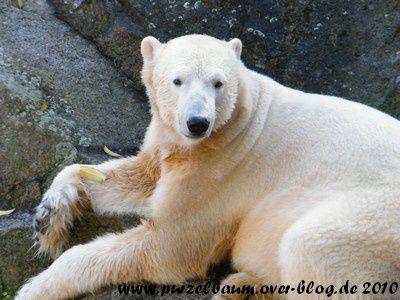 Knut am 30. Oktober 2010