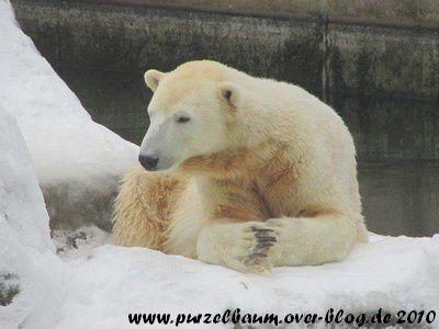 Knut am 28. Dezember 2010