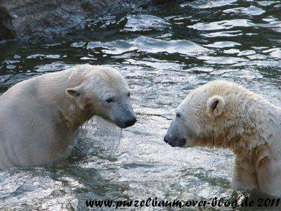 Knut und Tosca am 22. Januar 2011