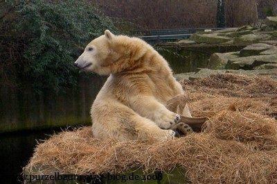 Knut am 26. Januar 2008