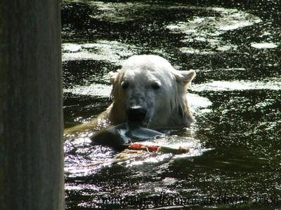 Knut am 29. Juli 2009