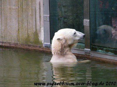 Knut am 26. September 2010