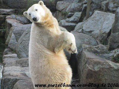 Knut am 25. Oktober 2010