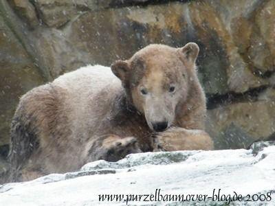 Knut am 3. Dezember 2008