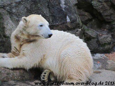 Knut am 20. Januar 2011