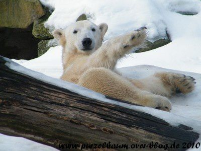 Knut am 20. Februar 2010
