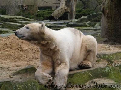 Knut am 22. März 2009