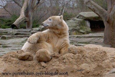 Knut am 26. März 2008
